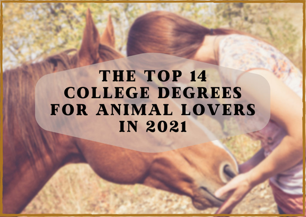 The 14 Best College Degrees for Animal Lovers in 2021