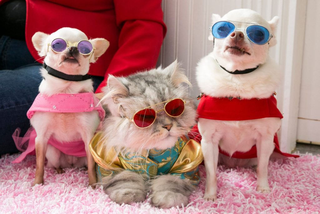 patternmaking for dog garments - strange college classes