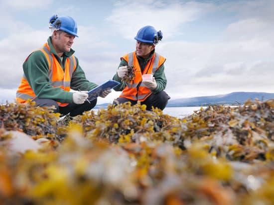 Environmentalist examining seaweed