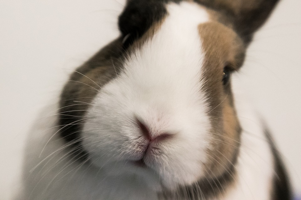 rabbit - animal lovers college degrees