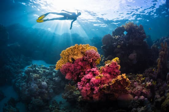 Free diver swimming underwater over vivid coral reef. Red Sea, Egypt